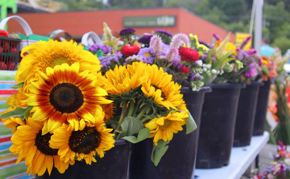 Best Day Trips in Toronto - Sunflowers